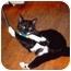 Photo 2 - Domestic Shorthair Cat for adoption in Toronto, Ontario - Grace