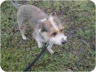 Wirehaired Pointing Griffon/Otterhound Mix Dog for adoption in Fort Valley, Georgia - Casey