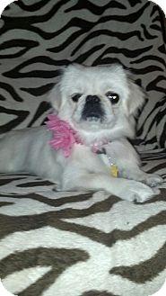 Pekingese Mix Dog for adoption in Las Vegas, Nevada - Sadie