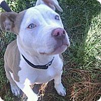 Adopt A Pet :: Jayda - Geismar, LA