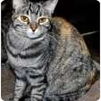 Adopt A Pet :: K-Marilyn4-Marie - Colorado Springs, CO