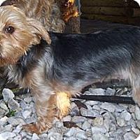 Adopt A Pet :: Holly - CAPE CORAL, FL