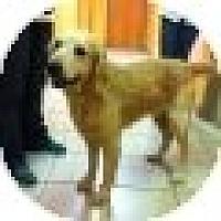 Adopt A Pet :: Ford - Denver, CO