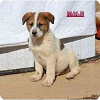 Adopt A Pet :: Ramos - New Boston, NH