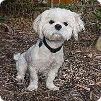 Adopt A Pet :: Sammy - North Palm Beach, FL