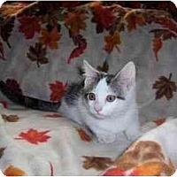 Adopt A Pet :: Casper - Spencer, NY