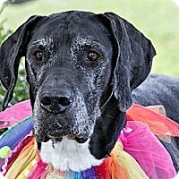 Adopt A Pet :: Rita - Hanover, MD