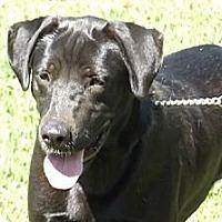 Adopt A Pet :: Luke - Coventry, RI