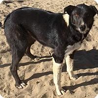 Adopt A Pet :: Starlight - Phelan, CA