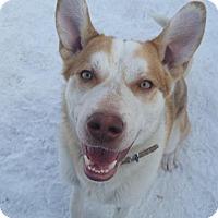 Adopt A Pet :: Murdoch - Saskatoon, SK