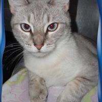 Adopt A Pet :: Luna - Shelbyville, KY