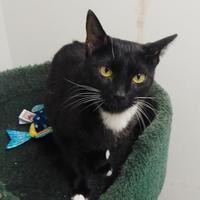 Adopt A Pet :: Panda - Clearfield, PA
