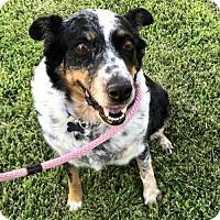 Adopt A Pet :: Suzie - Anaheim, CA