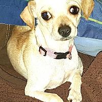 Adopt A Pet :: Libby Lou - Andalusia, PA