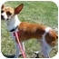 Photo 2 - Fox Terrier (Toy) Mix Dog for adoption in Calgary, Alberta - Bo