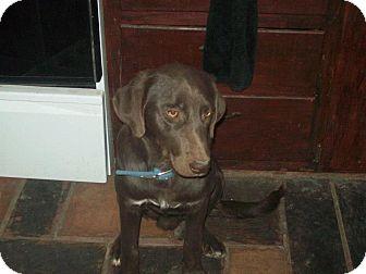Labrador Retriever/Setter (Unknown Type) Mix Dog for adoption in Alliance, Nebraska - Bojangles