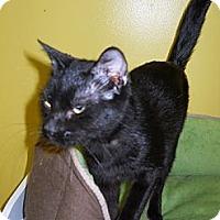 Adopt A Pet :: Donna - Mobile, AL