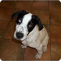 Adopt A Pet :: Casper - in CT! - Adamsville, TN