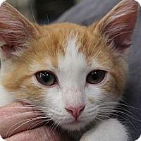 Adopt A Pet :: Ginger Rogers - Santa Monica, CA