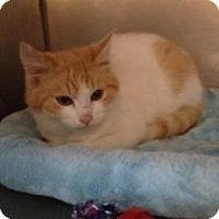 Adopt A Pet :: Ollie - Wenatchee, WA