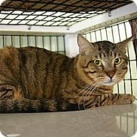 Adopt A Pet :: Pantera - Brooksville, FL