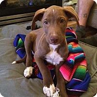 Adopt A Pet :: Larry - Vancouver, BC