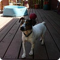 Adopt A Pet :: Chloe - Wisconsin Dells, WI