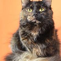 Adopt A Pet :: Chaco-lot 14850 - Atlanta, GA