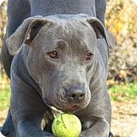 Adopt A Pet :: Zoey - Port Washington, NY