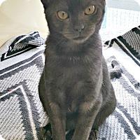 Adopt A Pet :: Trixie - Chesapeake, VA