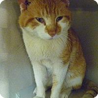 Adopt A Pet :: Paulie - Hamburg, NY