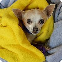 Adopt A Pet :: Jennie - Meridian, ID