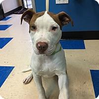 Adopt A Pet :: Monroe - Cerritos, CA