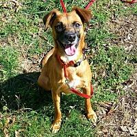 Adopt A Pet :: Rusty - Thomasville, NC