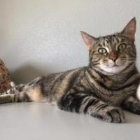 Adopt A Pet :: Mattie - Alpine, TX