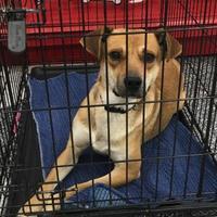 Adopt A Pet :: Robin - Tucson, AZ