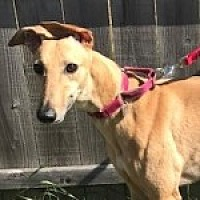 Adopt A Pet :: CLINT'S LIL RED - Grandville, MI