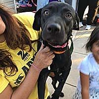 Adopt A Pet :: Comet - Chantilly, VA
