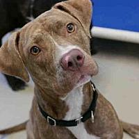 Adopt A Pet :: *MICKI - Austin, TX