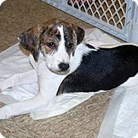 Adopt A Pet :: Lily - Minneola, FL