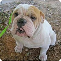 Adopt A Pet :: Hoss - Winder, GA