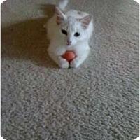 Adopt A Pet :: Xena - Mobile, AL