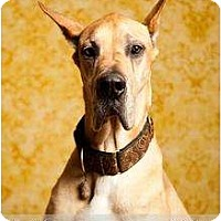 Adopt A Pet :: Brutus - Richmond, VA