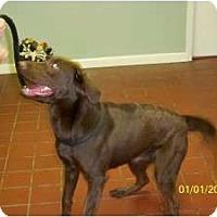 Adopt A Pet :: Ayla - Warren, NJ