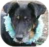 Shepherd (Unknown Type) Mix Dog for adoption in Eatontown, New Jersey - Mighty Mutt