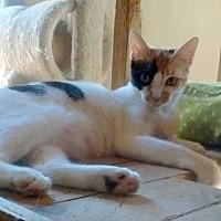 Adopt A Pet :: TINA TT - Marina Del Ray, CA