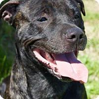 Adopt A Pet :: Blaze - Spokane, WA