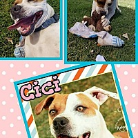 Adopt A Pet :: Cici - Scottsdale, AZ