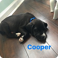 Adopt A Pet :: Cooper - GREENLAWN, NY