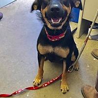 Adopt A Pet :: CUTIE - Cadiz, OH